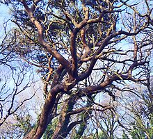 Twisty Tree by sarnia2