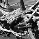 Driftwood on the Sassafrass River, Maryland by Nikanon