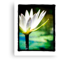 White Lilly - Elegant Beauty Canvas Print