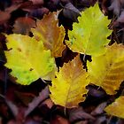 Lovely Leaves by Rachel Williams