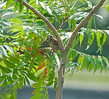 Summery Sparrow Sweetly Singing in the Sumac by Mike Oxley