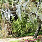 Spagna Moss by Rosalie Scanlon