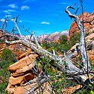 Hiking Zion by Barbara Manis