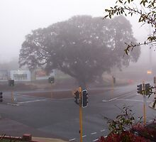 Moreton Bay Fig Tree in Fog by robertemerald