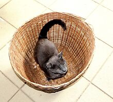 Kitty In a Basket by Haunted by Humans