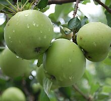 the little green apples by allisondegeorge