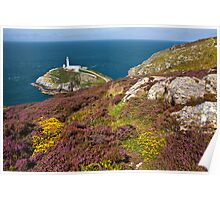 Heather at South stack Poster