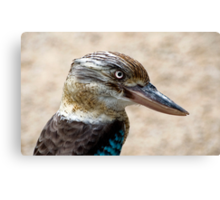 Blue Winged Kookaburra Canvas Print