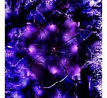 Entanglement Photographic Print