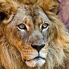 Majestic King by Ann J. Sagel