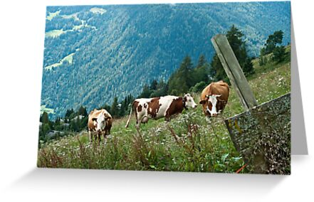 cows by Ilva Beretta