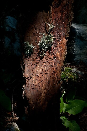 bark by Ilva Beretta