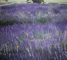 Fields of Lavender by Doris Billing
