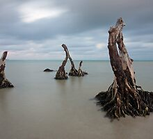 deep rooted by joel Durbridge