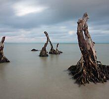 deep rooted by joel Durbridge