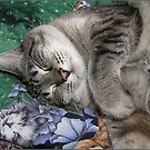 Catnip Dreams by CarolD