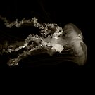 black and white jelly fish.... by wendys-designs