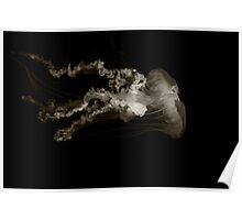 black and white jelly fish.... Poster