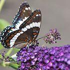 Butterfly Flower With Guest by Deborah  Benoit