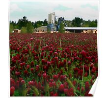 Fields of Red Clover Poster