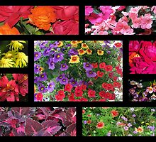 Collage of Color by DottieDees