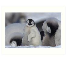 Half Asleep Emperor Penguin Chick - Snow Hill Island  Art Print