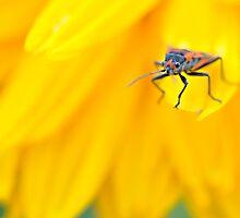 Assassin Beetle by JudiLyn