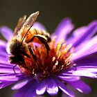 A Bee on purple flower by Meeli Sonn