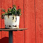 red wall/rusty bucket by Lynne Prestebak