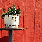 red wall/rusty bucket by Lynne Prestebak