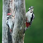 Mama & Junior Woodpecker by Sarah-fiona Helme