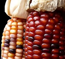 Indian Corn by Dawn Barberis-Viczai