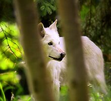 Watcher in the Woods by Micci Shannon