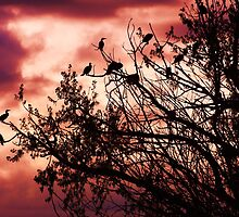 Roosting by Thomas Stevens