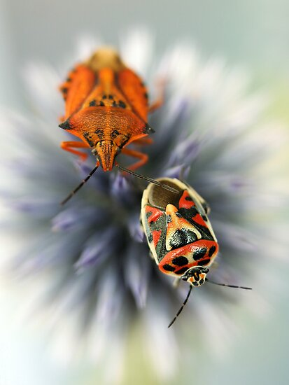 Bugs by jimmy hoffman