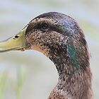 Duck with Crumbs on His Beak by DebbieCHayes