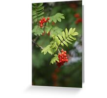 The Doorway To Autumn Is Now Opening............ Greeting Card