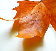 Tears Of Rain On A Golden Brown Leaf by David Marsden