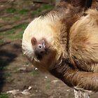 Sloth #4 by Dawn Barberis-Viczai