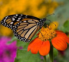 Monarch in the Garden by Adam Bykowski