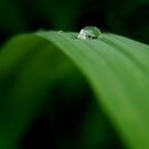 Dew Drop by Joe Mortelliti