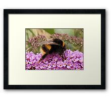 Bumble Bee Moment Framed Print