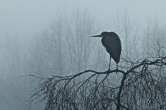 Foggy Great Blue Heron by Stephen Hawkins