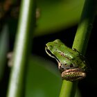 Tiny Frog by Stephen Hawkins