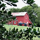 Red Barn Through The Foliage      by © Bob Hall