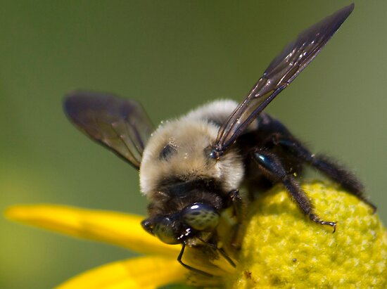 Busy Bee by Shelley Neff