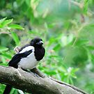 One For Sorrow by duncandragon