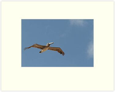 A lone pelican in Florida by Keith Larby