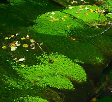 Mossy Creek by RavenFalls