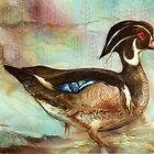 Wood Duck by roxygen